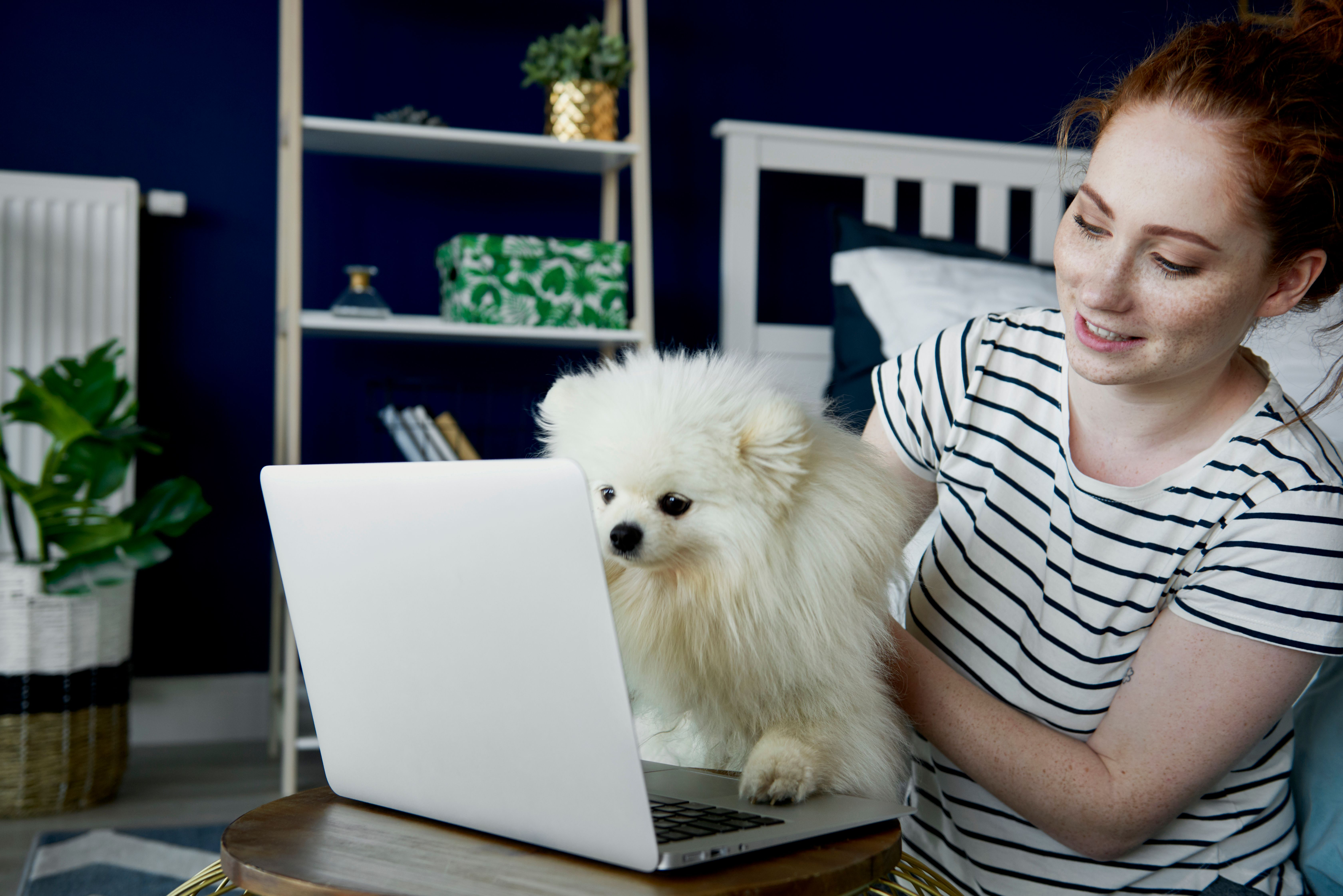 A Build To Rent tenant happily holding their white pet dog looking at a laptop while at home