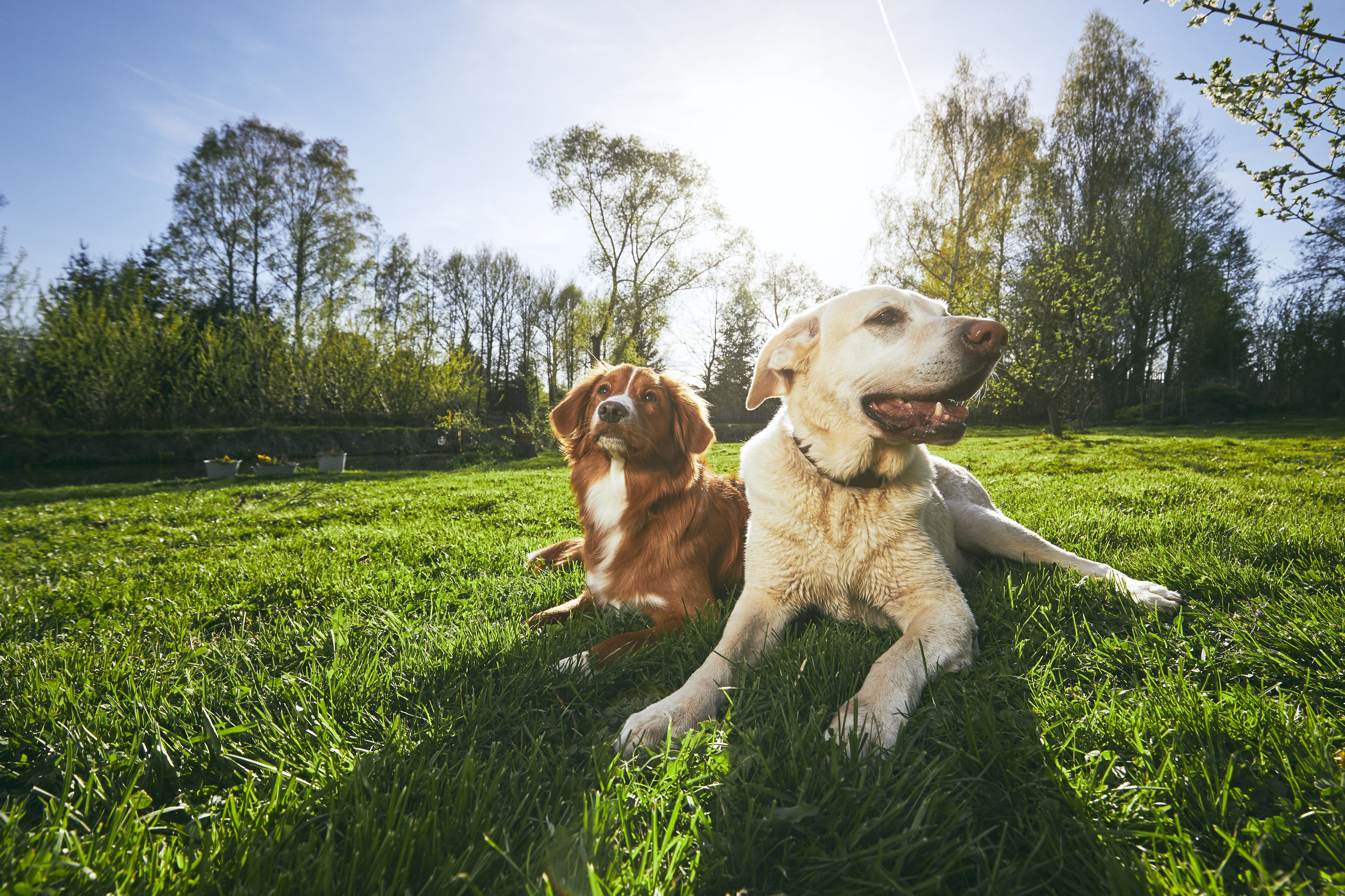 two friendly dogs in nature.jpg