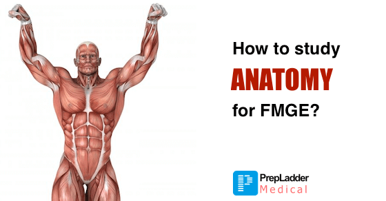 How To Prepare Anatomy For Fmge