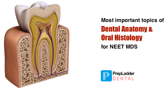 Most Important Topics Of Dental Anatomy Oral Histology For Neet Mds