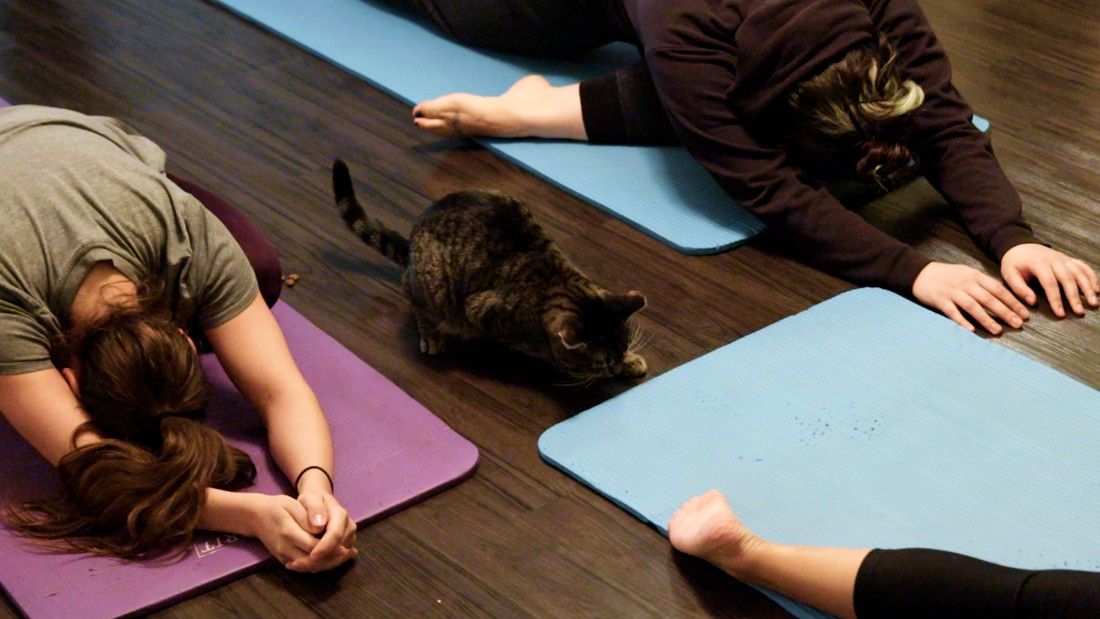 http://i2.cdn.cnn.com/cnnnext/dam/assets/170324112651-away-nyc-cat-yoga-super-169.jpg