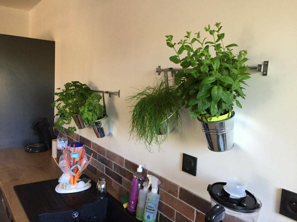 plantes-pots-decoration-cuisine-moderne
