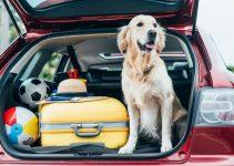 Jak przewozić psa w samochodzie: zasady, zalecenia, bezpieczeństwo