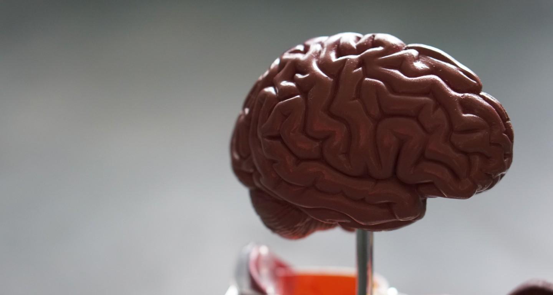 neurodiversité - variabilité cerveau