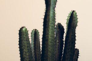 Illustration : 5 conseils pour instaurer la culture du feedback en entreprise