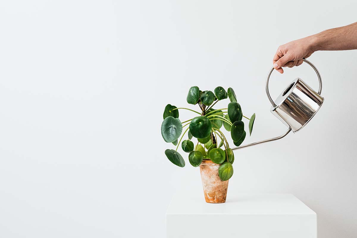 plante verte arrosée