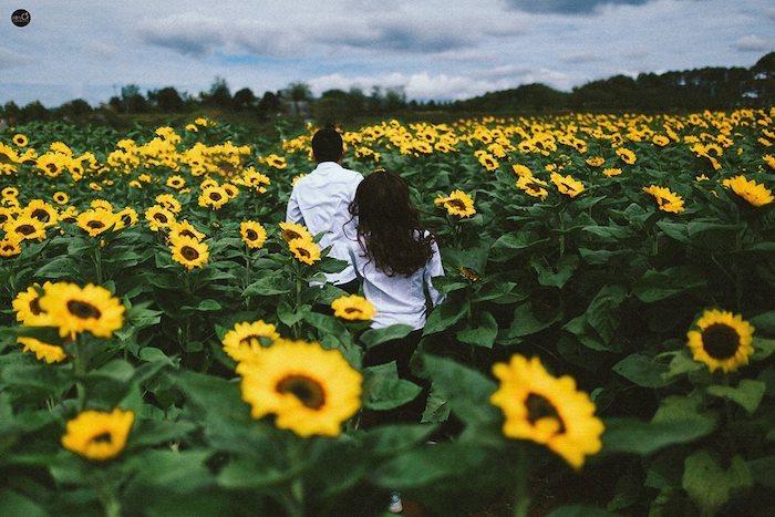 Du lịch Đà Lạt nên đi mùa nào là đẹp và lãng mạn nhất - Mùa Hè - Cánh đồng hoa Hướng Dương Đà Lạt