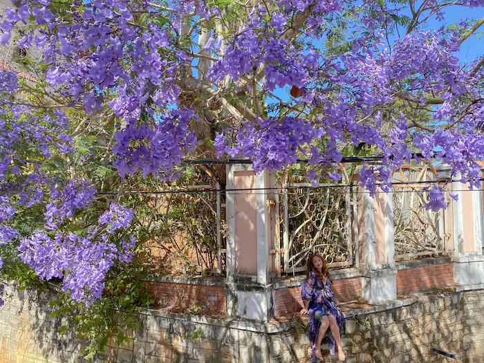 Du lịch Đà Lạt nên đi mùa nào là đẹp và lãng mạn nhất - Mùa Xuân - Hoa Phượng Tím Đà Lạt