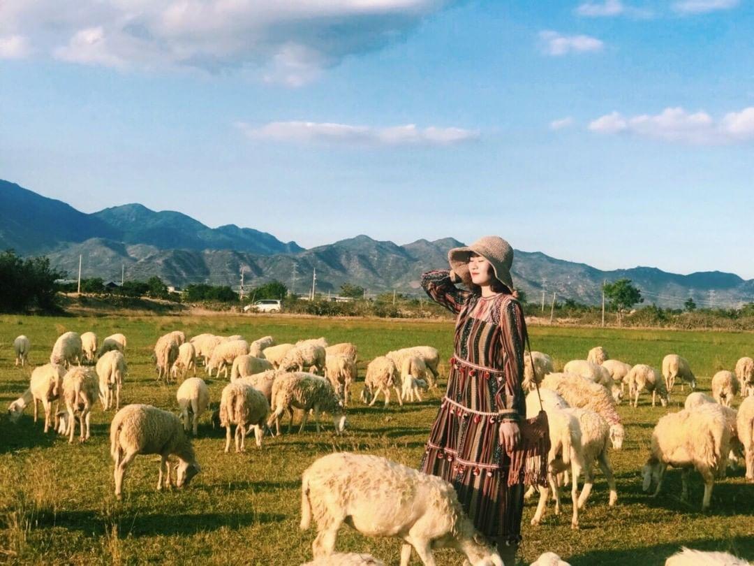 Đồng cừu An Hoà - Ninh Thuận