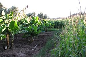 Govt. to Set up National Organic Farming Research Institute