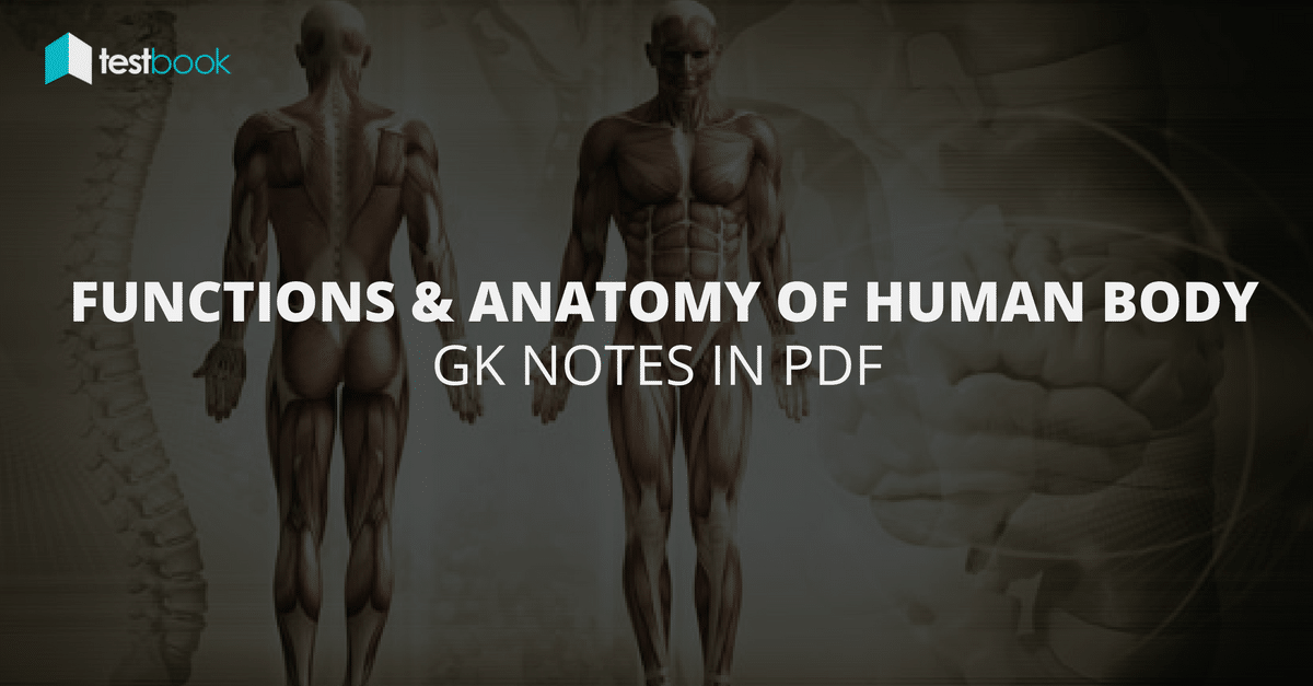 Functions And Anatomy Of Human Body Gk Notes In Pdf Testbook Blog