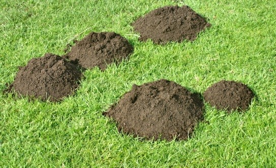 Expected Phrases and Idioms for SSC and Banking Exams - Make a mountain out of a molehill