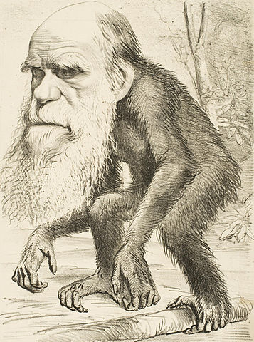 cartoon Darwin chimp