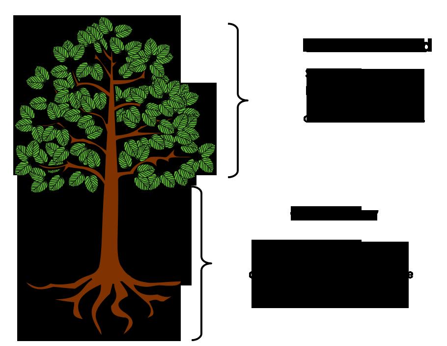 diferencia entre caracter personalidad arbol tronco raiz raices hojas
