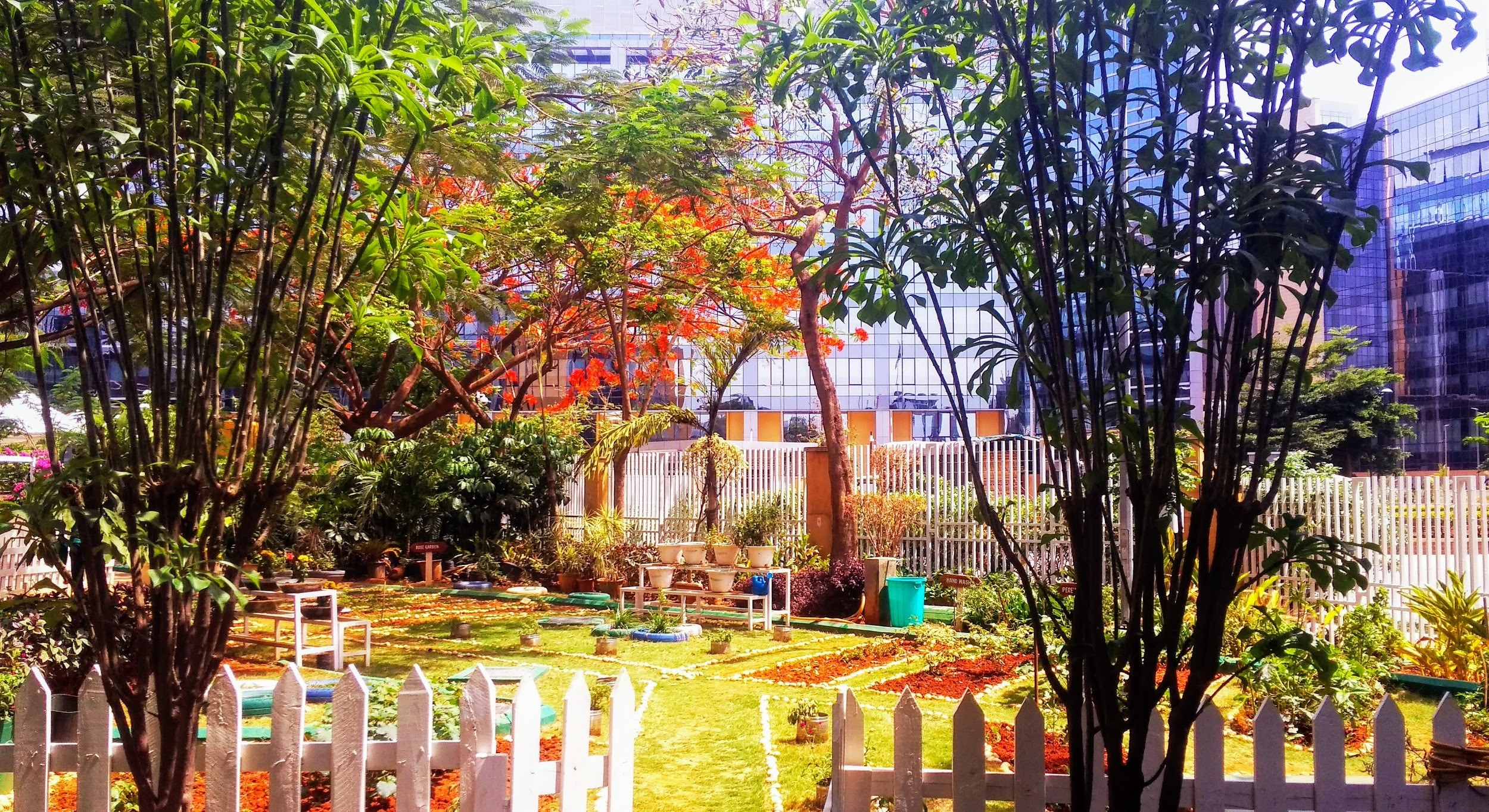 The Cisco community garden beams with light on a beautiful sunny day in Bangalore.