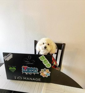 Snow, a little white pup, sits at a laptop.