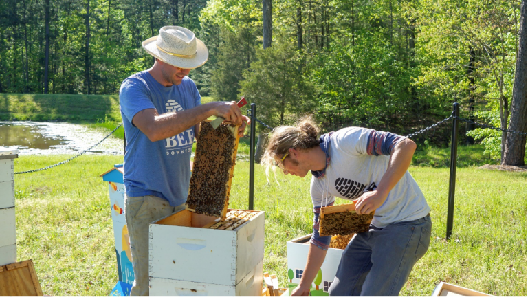 Beekeepers inspect the Cisco beehives