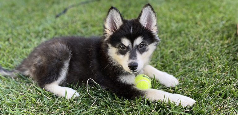 A photo of a puppy with a ball