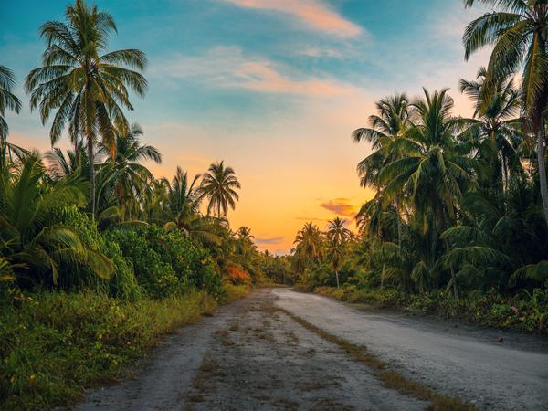 Coconut palm trees at dawn.