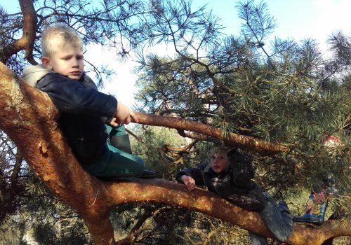 Bewegings- en belevingsspel in het bos