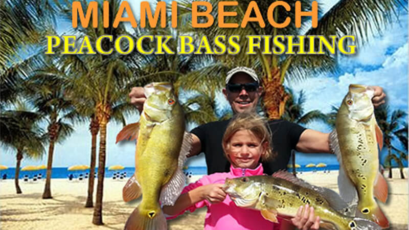 Peacock Bass charter fishing in Miami