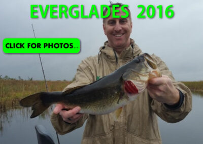 2016 Florida Everglades Pictures