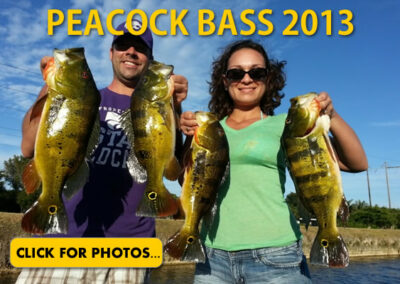 2013 Peacock Bass Pictures