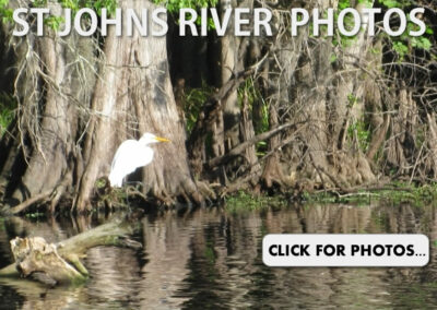 St Johns River Photos