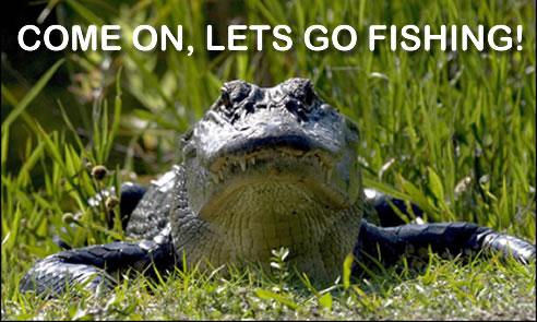 fort-lauderdale-alligator
