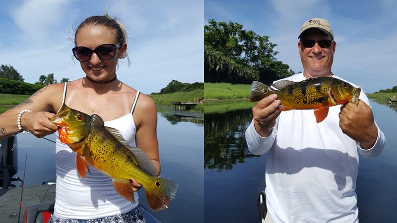 Florida Peacock Bass Charter