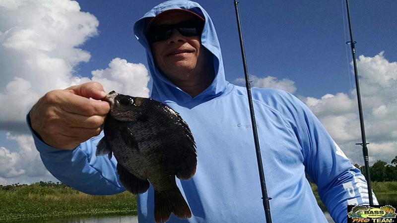 Shell Cracker Bream Fishing Trip