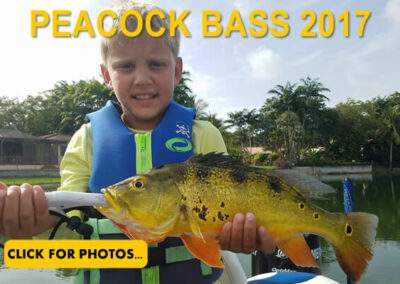 2017 Peacock Bass Pictures