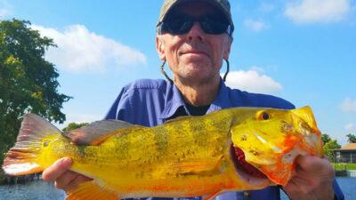 South Florida Peacock Bass Fishing