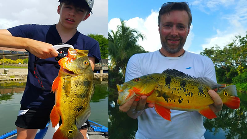Fall Peacock Bass Fishing 1