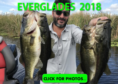 2018 Florida Everglades Pictures