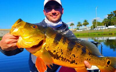 Miami Peacock Fishing Report on Freshwater Fishing Charter