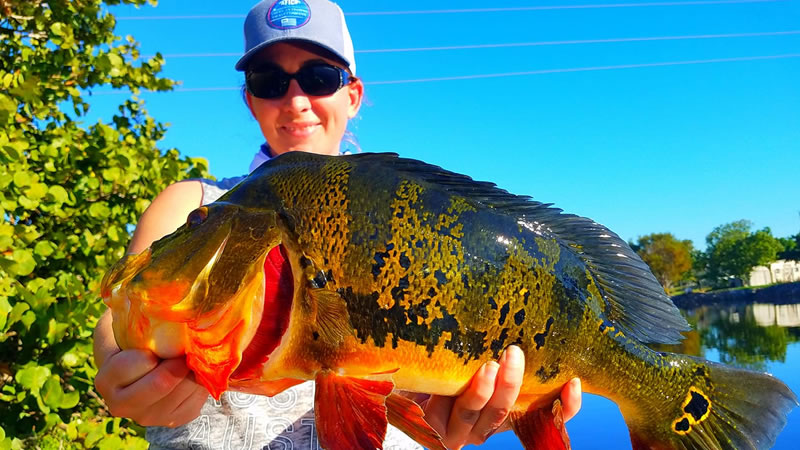 Miami Peacock Fishing Report 2