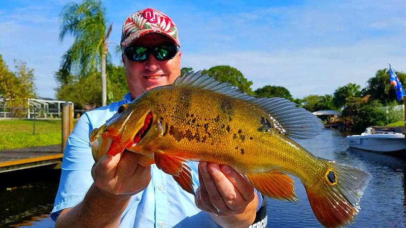 Miami Peacock Fishing Report 3