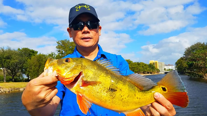 Miami Peacock Fishing Charters