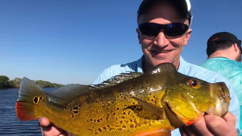 Male Peacock Bass Fishing 1