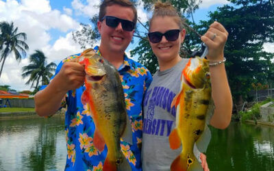 Honeymoon Fishing Charters for Exotic Miami Peacock Bass