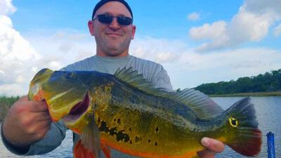 Big Florida Peacock Bass 1