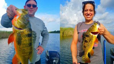 Big Florida Peacock Bass 2