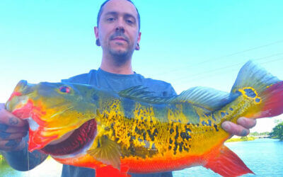 Florida Peacock Bass Fishing Spawn for Trophy Peacock Bass