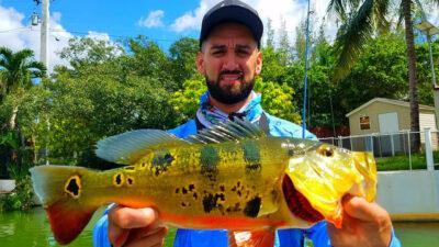 Miami Urban Peacock Bass Fishing 2