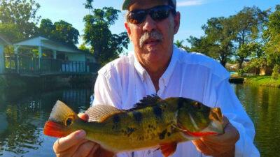 FL Peacock Bass Trips 2