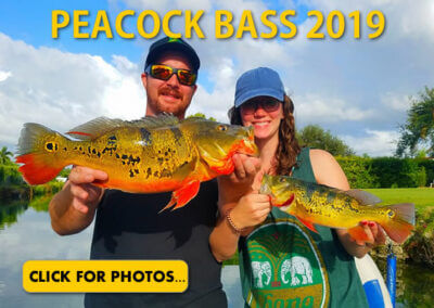 2019 Peacock Bass Pictures