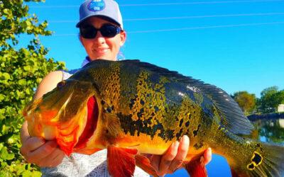 Peacock Bass Orlando Florida 2020