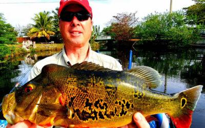 February Miami Bass Fishing for Florida Peacock Bass