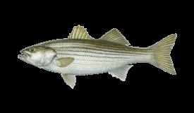 Treasure Coast fishing charter